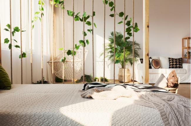 Plantas na decoração da casa