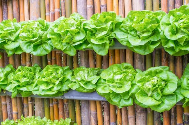 Temperos perfeitos para horta vertical