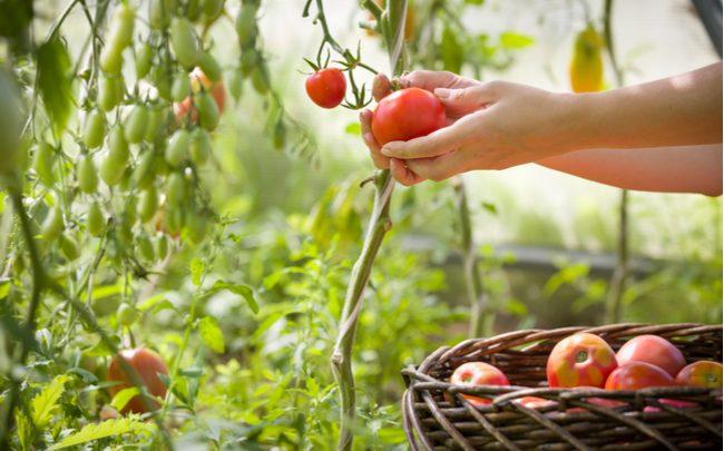 Alimentos para replantar - SEPAC