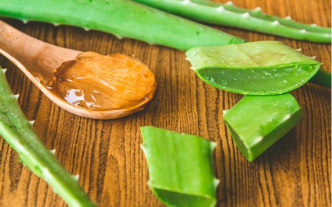 Utilidades da Aloe vera