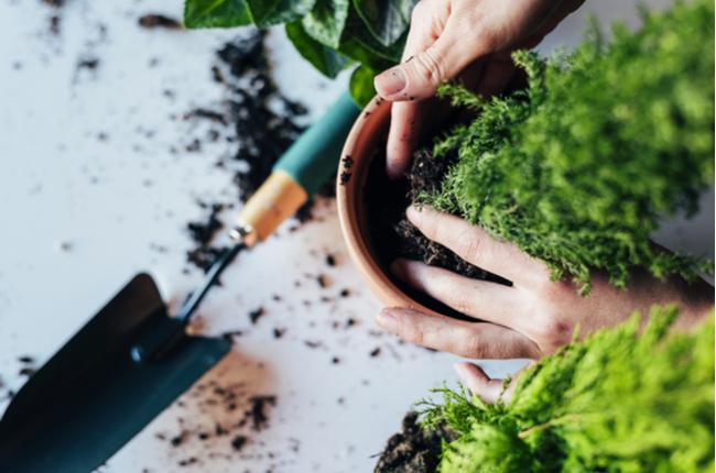 Horta no apartamento: 10 ideias criativas e fáceis