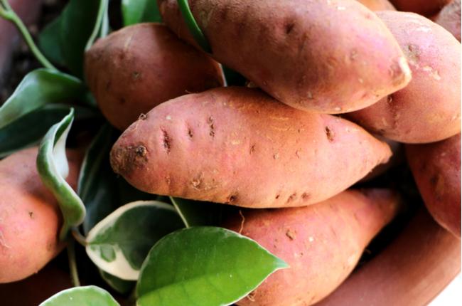 Cultivando batata-doce em casa - SEPAC