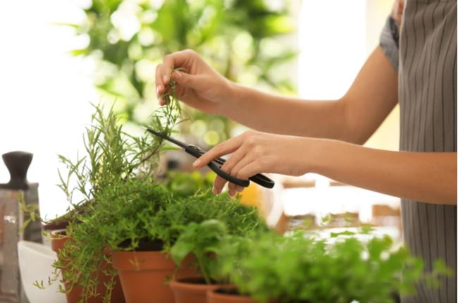 Dicas para escolher as plantas - SEPAC