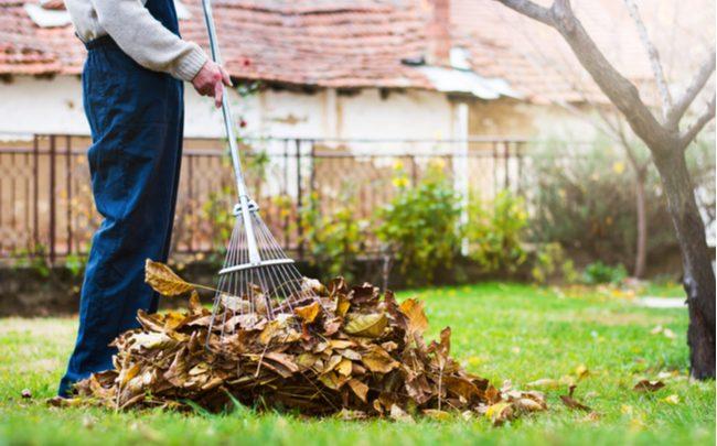 Como cuidar do jardim no outono - SEPAC