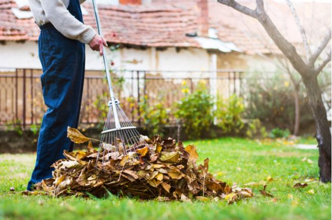 Como cuidar do jardim no outono