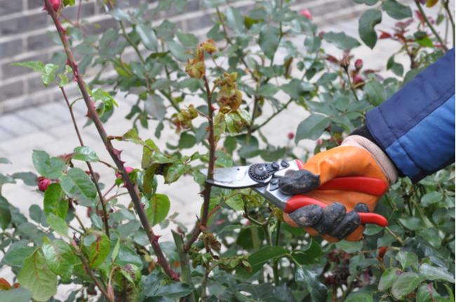 cuidar do jardim no outono - SEPAC