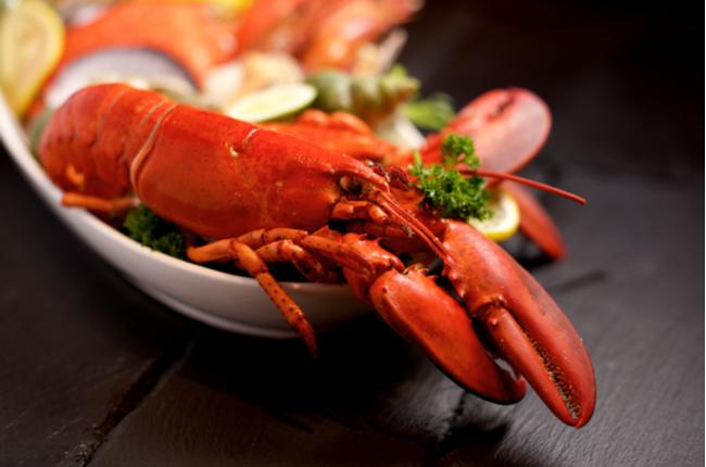 lagosta delicioso crustáceo - SEPAC