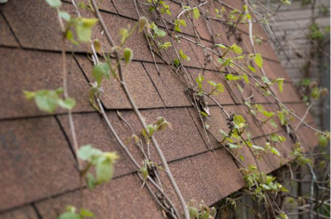 Conheça a telha hidropônica para o cultivo de plantas