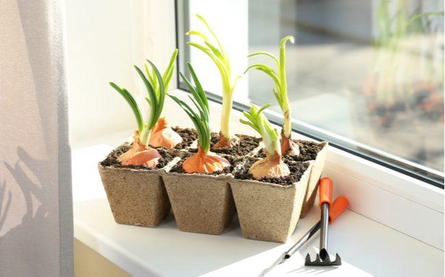 como cultivar em casa - SEPAC