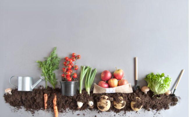 alimentação orgânica - SEPAC