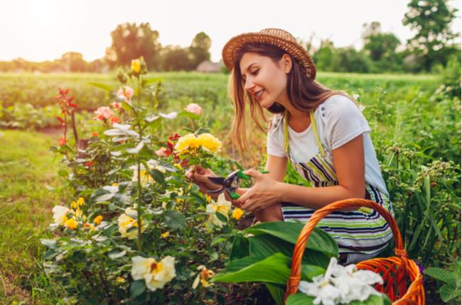 mulher podando flores no campo - SEPAC
