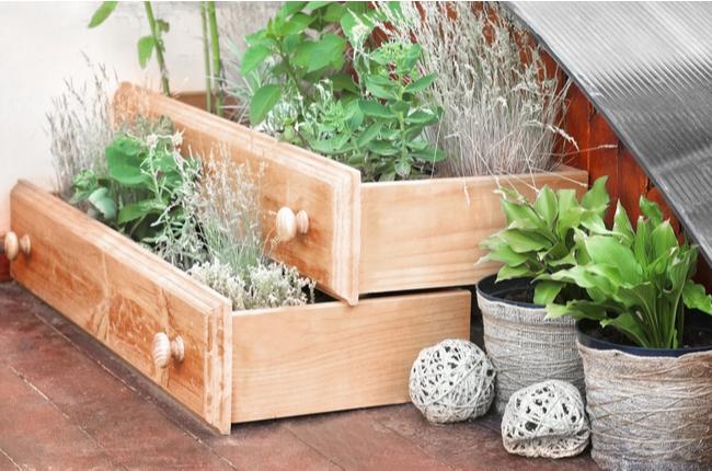 gaveta como jardim improvisado - SEPAC