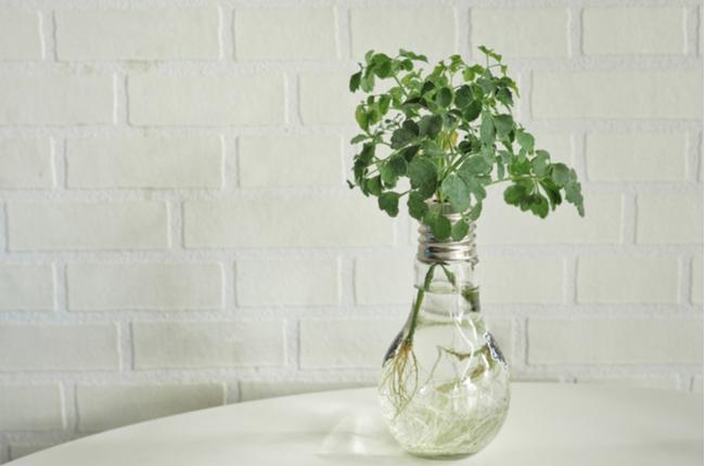 lâmpada como vaso de planta - SEPAC