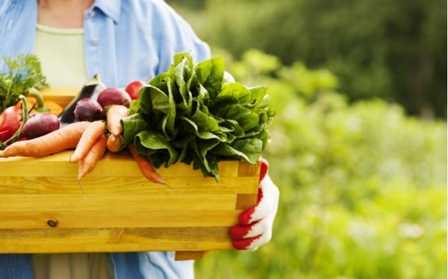 caixote repleto de alimentos orgânicos