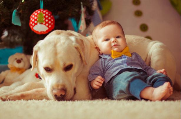 Raças de cachorro que adoram crianças - BabyBoo