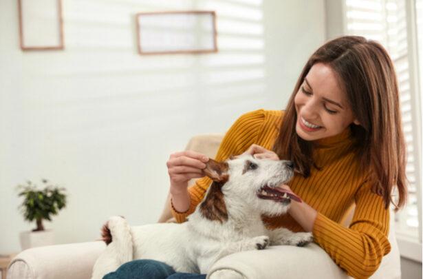 cachorro companheiro - SEPAC